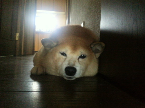 眠い犬 003.jpg
